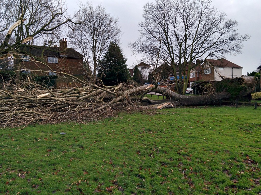 Broxbourne Common Tree