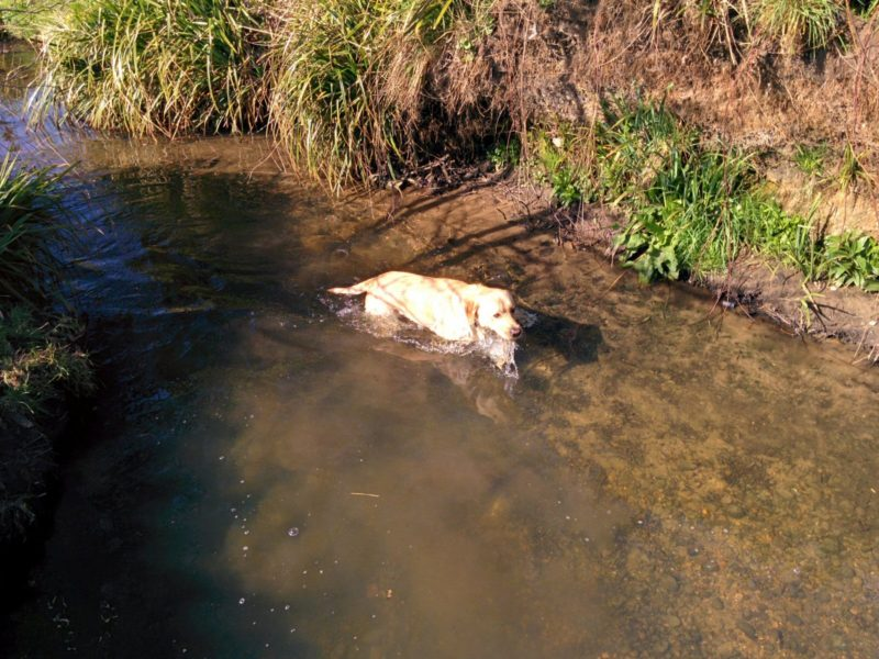 Ralph in Stream