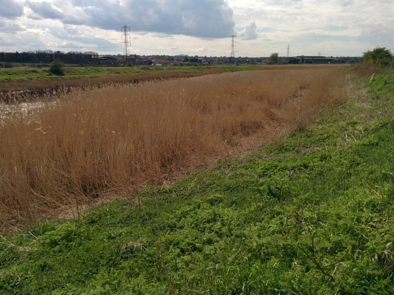 River Cray Reed Beds