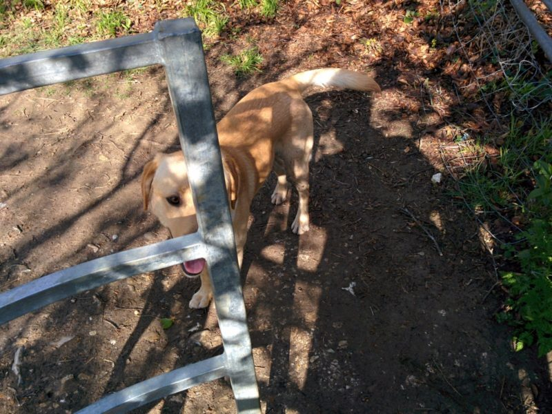 Ralph at Kissing Gate