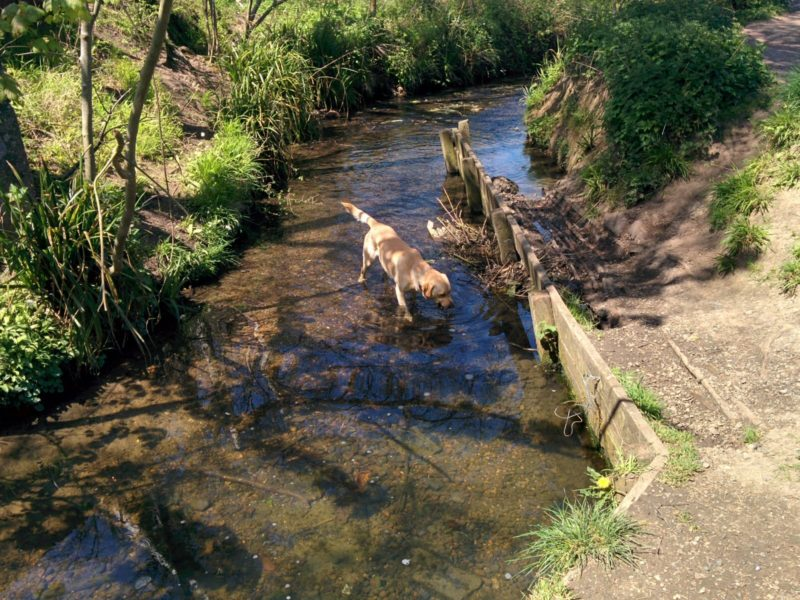 Petts Wood Stream